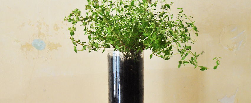 We offer a friendly, welcoming place to spend your thyme.